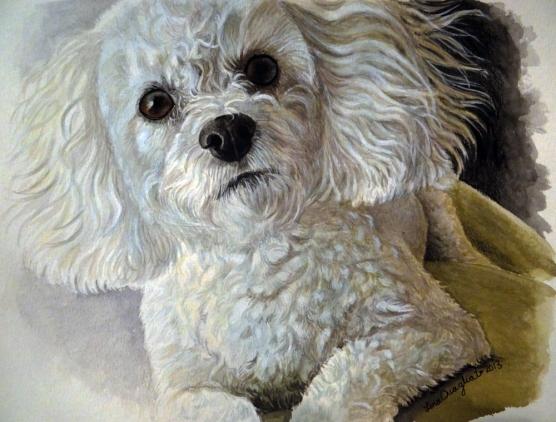 """""""Allie"""", poodle"""