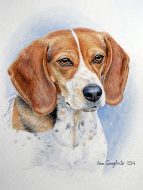 """Bow"", the Beagle. Watercolor"