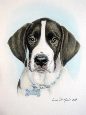 """Moo"" (sister to Emma). Great Dane/St. Bernard puppy"