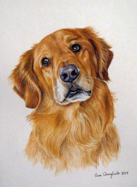 """Doc,"" Golden Retriever"
