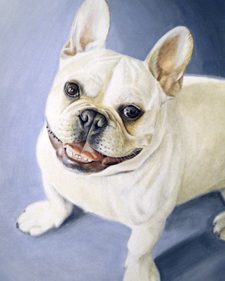"""Gordon"" French Bulldog"
