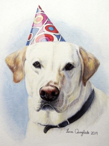 """Gilbert"" (brother to Harry) white lab in party hat"